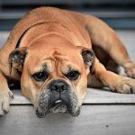 Oorzaken van chronisch vermoeidheidssyndroom